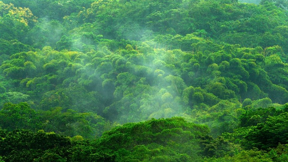 Keywords: colombia;fog;water;rain;rainy;tropical;green;tree;forest;jungle;nature;travel;outdoor;background;mountain;environment;landscape;plant;season;thailand;beautiful;summer;natural;wood;park;foliage;beauty;weather;fresh;wild;leaf;winter;view;asia;light;moss;scenic;mist;lush;trunk;morning;ground;sun;rainforest;national;spring;tourism;ecology;vegetation;mystery